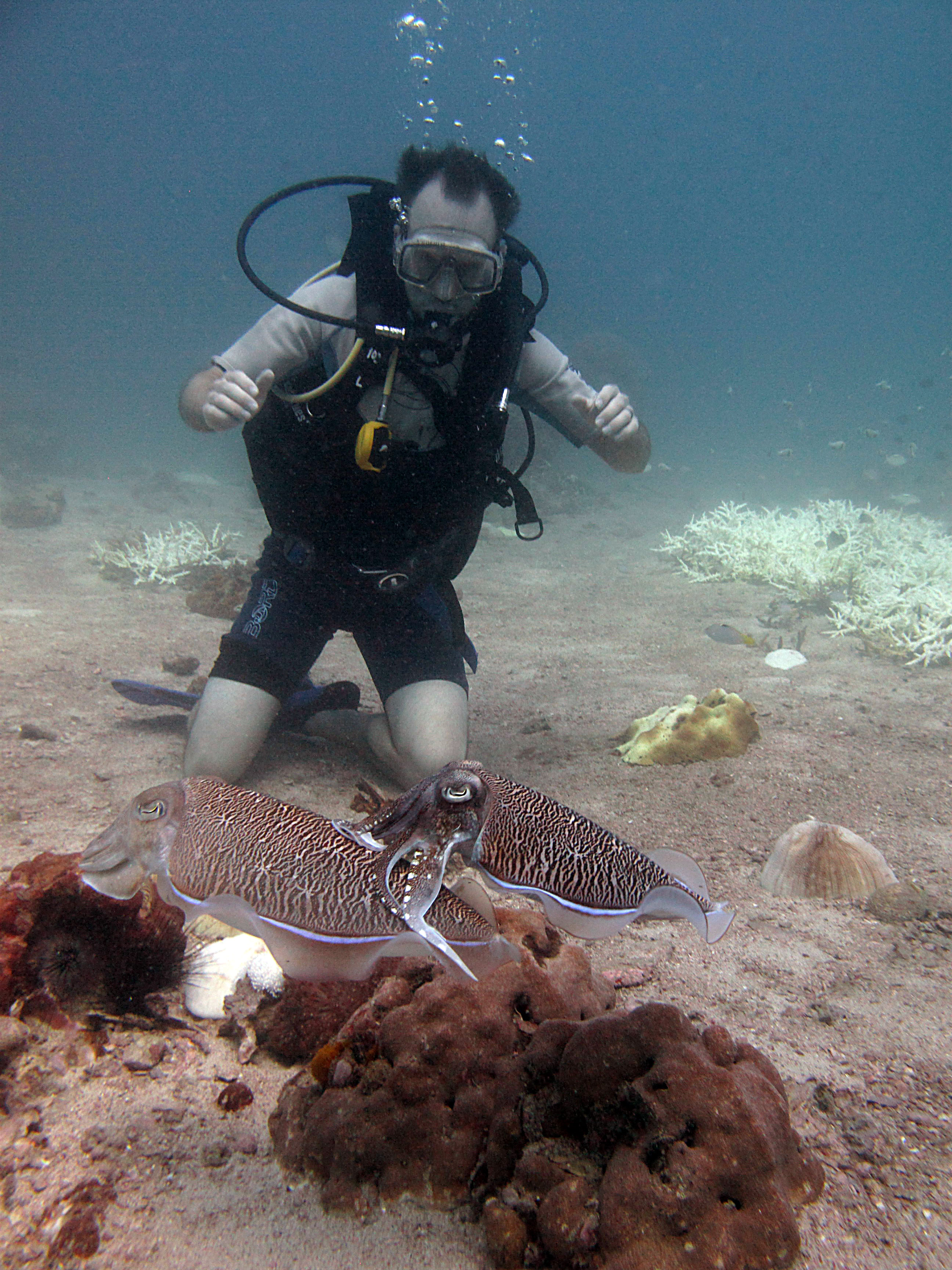 Scuba Cuttle Fish in Thailand