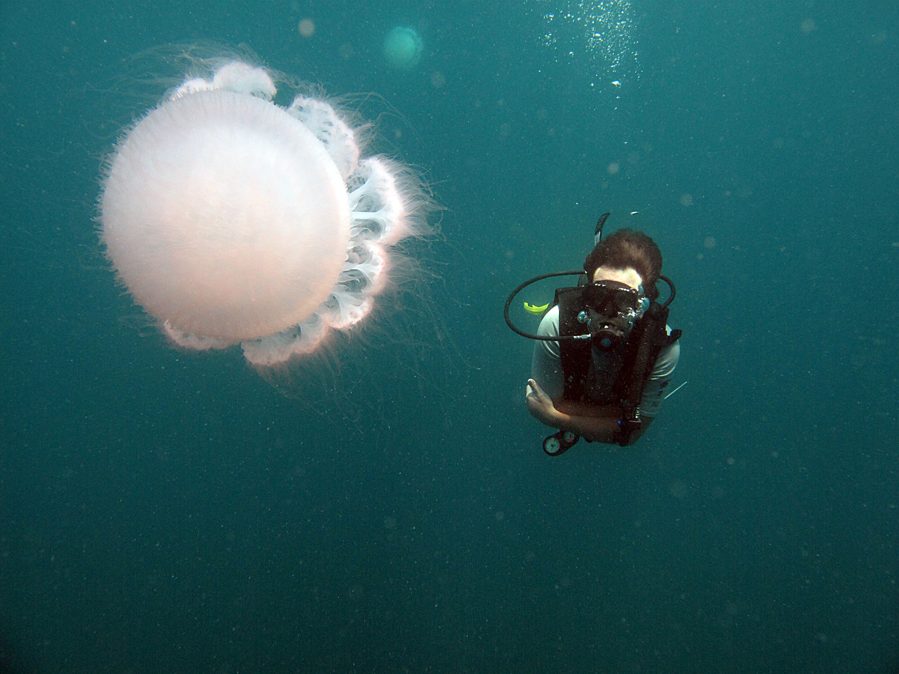 Scuba Jelly Fish in Thailand