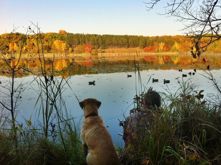 Hunting Yesterday morning, not exactly duck weather, but a beautiful morning nonetheless....