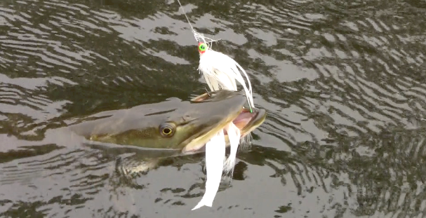 Flyfishing Hucking flies for the Fish of 10,000 casts: the muskellunge.