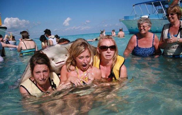 Entertainment Sting Ray