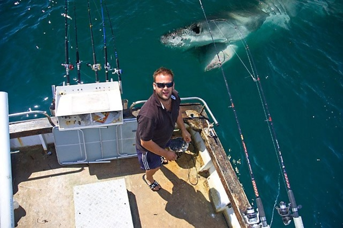 Fishing shark photobomber