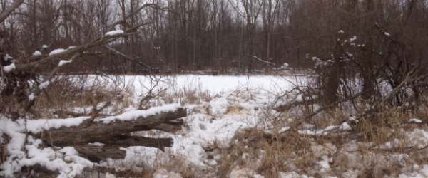 Hunting FUNNELING DEER MOVEMENT WITH A CHAINSAW.  Article by Mark Kenyon on 04 Mar 2013