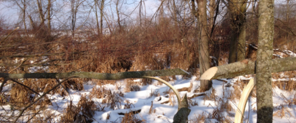 Hunting HINGE CUTTING TO HOLD AND HUNT MATURE BUCKS.  Article by Mark Kenyon