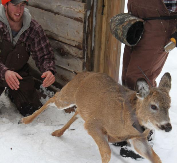 Hunting Wisconsin Mortality Study: Hunters Kill More Bucks Than Anything Else.  Article by Scott Bestul posted May 2, 2013
