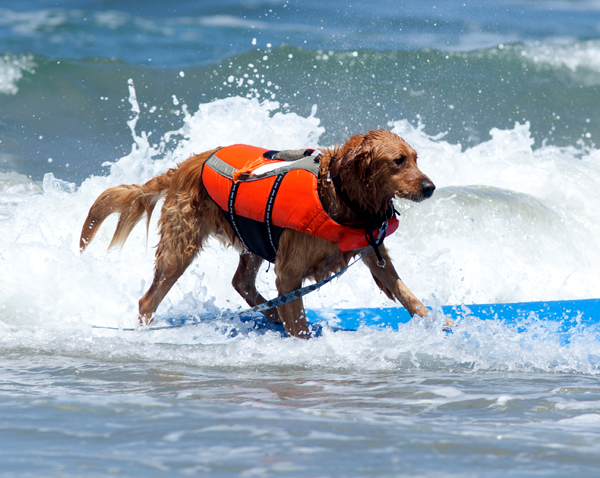 Surf Surf dog in action!