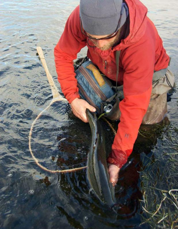 Flyfishing Getting Real About the Virtues of Catch-and-Release Fishing.  Article by Kirk Deeter