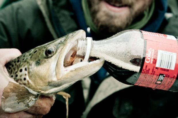Flyfishing Can Coca-Cola Save a Dying Fish?  Article by Tim Romano