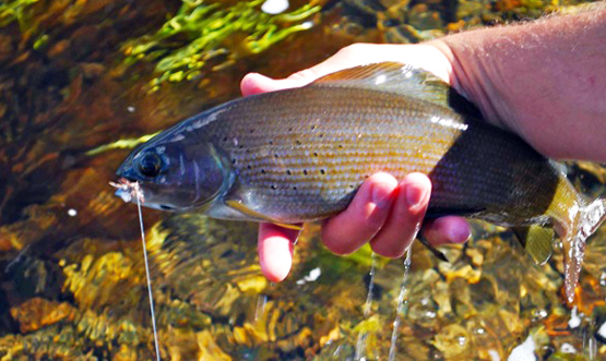 Flyfishing Is Tenkara Fly Fishing a Fad?  Article by Kirk Deeter
