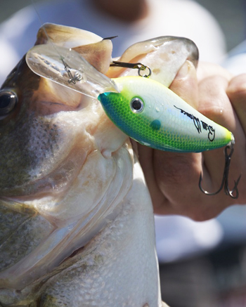 Fishing Lure Tip: How To Choose the Right Crankbait for Any Situation.  Article by John Merwin