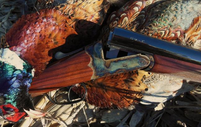 Hunting Shotgun Review: Dickinson Double.  Article by Phil Bourjaily