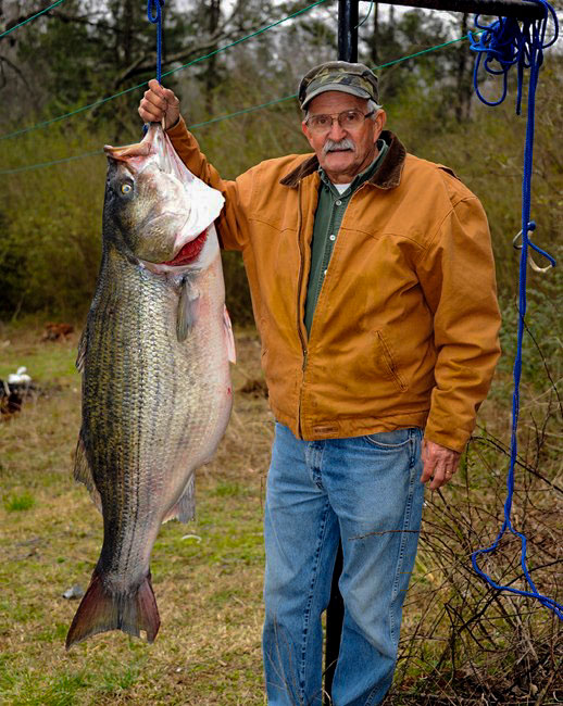 Fishing World Record Striper Caught by Alabama Angler - catches potential state and world record land-locked striped bass