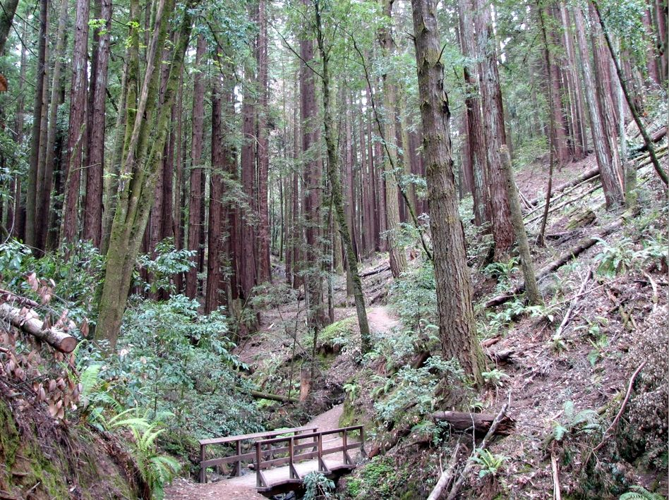 Camp and Hike Towering trees on Cowell Redwoods Loop outside San Francisco