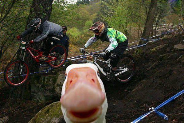 MTB Came across this animal photobomb today.  Seemed appropriate.