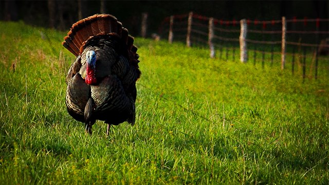 Hunting Was your first turkey a jake or a tom?