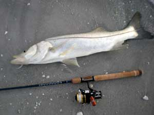 Fishing Beach Snook - master catching snook off Florida's beaches after some brief training.  Article by Jan S. Maizler