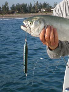 Fishing A Guide to Bluefish and Mackerel off Florida's Coast.  Article written by Jan S. Maizler