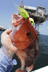 Fishing Summer Snapper Season - Shorter seasons and conservative bag limits mean you're better off targeting big fish.  Article by Capt. Joe Richard