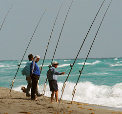 Fishing Surf Fishing Basics - tips on reading the surf, choosing baits and tackle and locating fish.  Article by Capt. Joe Richard