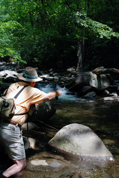 Flyfishing Trout Fishing Great Smoky Mountain National Park.  Article written by Bill Cooper