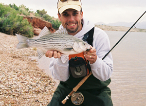 Flyfishing Temperate Bass on the Fly - Chasing stripers, white bass and hybrids.  Article by Mike Huffman
