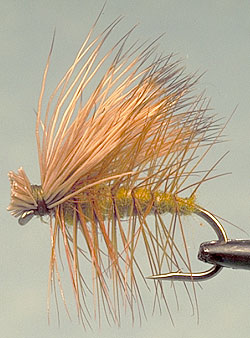Flyfishing Fly-Fishing With Caddis.  Article written by Jason Akl