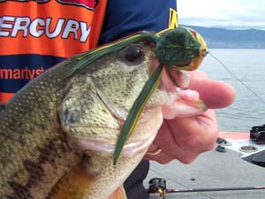 Fishing Froggin' for Bass.  Article written by Tom Branch, Jr.