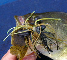 Fishing Tuning Up Your Bass Jigs.  Article written by Justin Hoffman