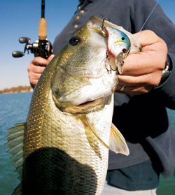 Fishing The Inside Scoop on Super-Shallow Crankbaits