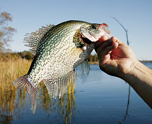 Fishing Advanced Crappie Jigging Tactics