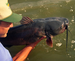 Fishing Understanding the Catfish Spawn