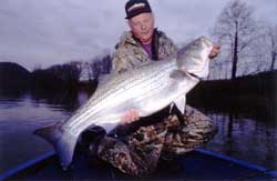Fishing Live-Bait Secrets for Giant Stripers.  Article written by Don Wirth