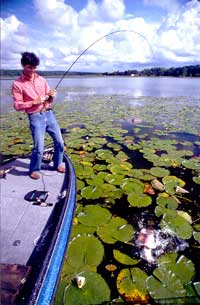 Fishing Lures for Wood, Rock and Weeds.  Article written by Don Wirth