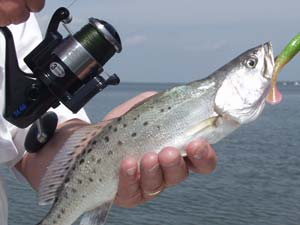 Fishing Choosing Saltwater Gear: Spinning or Baitcasting.  Article written by Ron Brooks