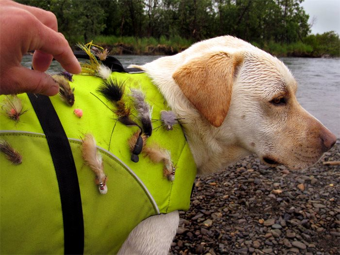 Flyfishing Best dog ever...