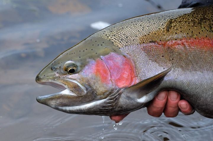 Kayak and Canoe Kayak Contest Countdown: #6 - H, by Fishman