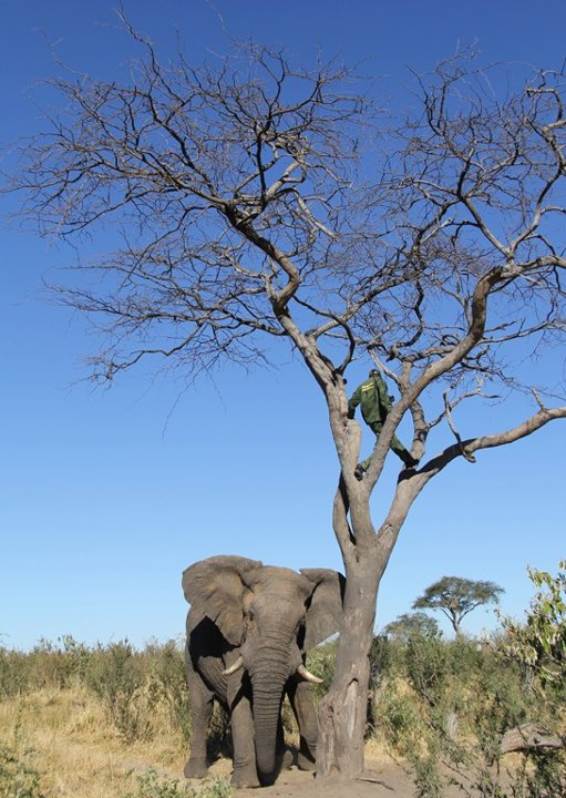 Entertainment Charged by a bull elephant in Botswana. See the full story and more photos here: http://bit.ly/10kWI73