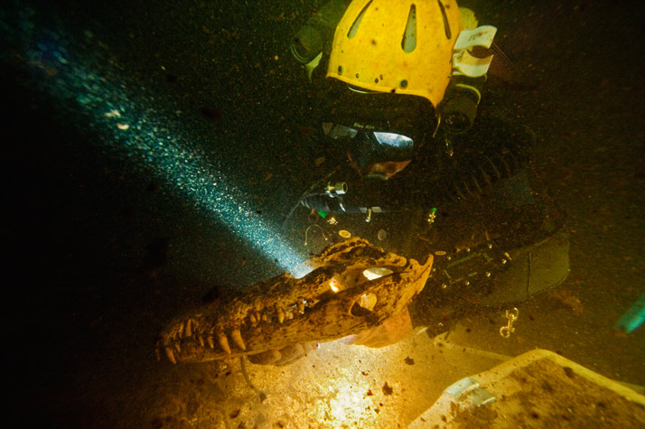 Scuba Brian Kakuk lifts a more than 3,000-year-old Cuban crocodile skull—an animal no longer found in the Bahamas—from sediment in Sawmill Sink
