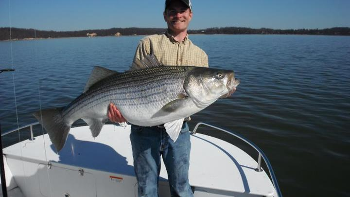 Kayak and Canoe Kayak Contest Countdown: #2 - Huge Striper, by mmorgan