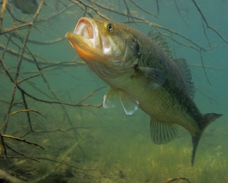 Fishing How to Catch Post-Spawn Bass: Baits and Tips from a Texas Guide.  Article by David A. Brown posted April 15, 2013