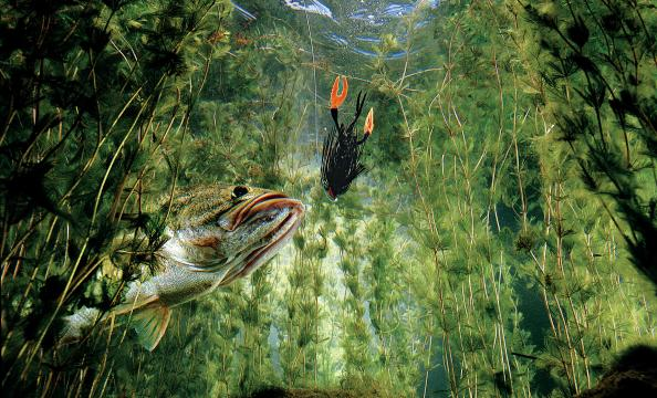 Fishing How to Fish for Bass in the Weeds: Tips from 4 Top Experts.  Article by David A. Brown posted April 12, 2013