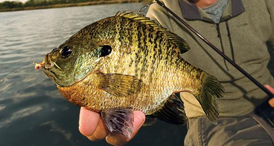 Fishing Best Baits: 15 Hottest Lures for Panfish.  Article by David A. Brown posted April 5, 2013