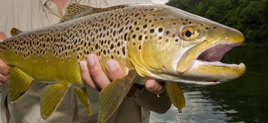 Fishing Top Trout Lures: 13 Best Trout Fishing Baits of All Time.  Article by David A. Brown posted March 28, 2013