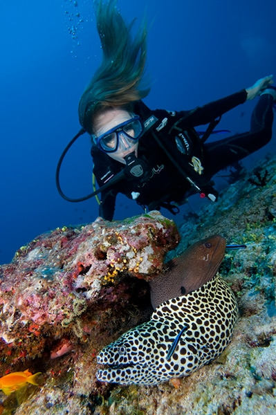 Scuba HONEYCOMB AND GIANT MORAY EELS - 