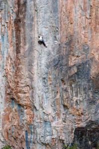 Climbing Rumor Has It (5.11b), Rifle Mountain Park, Colorado.  Article by Dougald MacDonald