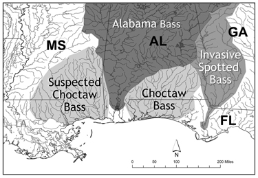 Fishing The Southeast's New Bass Species, and Where to Find It.  Article by Daniel Xu on May 13, 2013