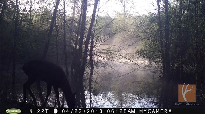 Hunting Finally checked a camera overlooking a beaver pond. My first check a month or so ago yielded nothing but today I got some good ones! Here's one of a few cool pictures.   - Moultrie Products -