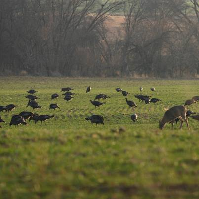 Hunting Mark Kayser shares 4 tips for turkey hunting success: http://bit.ly/101cNA2