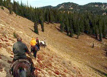 Hunting Deadwood Outfitters - for massive black bear and majestic trophy elk