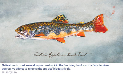 Flyfishing Native Waters - Brook trout are making a comeback in Great Smoky Mountains National Park.  Aryicle by Amy Leinbach Marquis